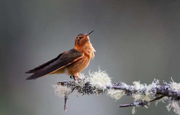 Картинка птица, колибри, Розовый солнечный луч