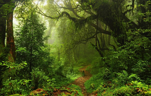 Картинка природа, красота, тропинка, nature, beauty, path, зеленая листва, лесная чаща, большие деревья, green foliage, forest …
