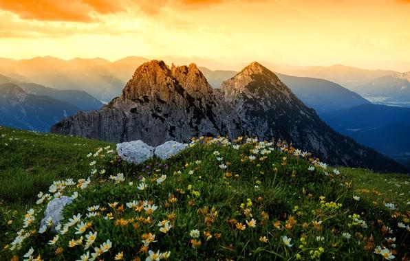 Картинка трава, пейзаж, цветы, горы, природа, Альпы, луга