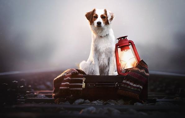 Картинка туман, собака, фонарь, железная дорога, плед, ящик