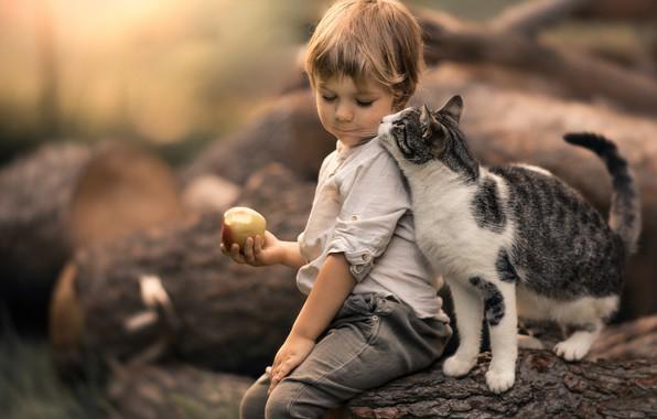 Картинка кошка, кот, яблоко, мальчик, дружба, друзья, боке