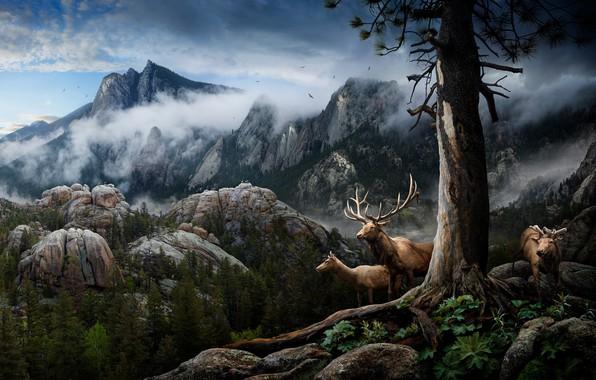 Картинка облака, горы, коллаж, олень, рога