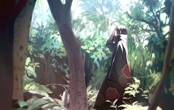Картинка forest, naruto, nature, art, tree, akatsuki, sharingan, Uchiha Itachi, by Ns7104