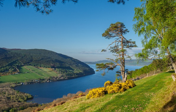 Картинка деревья, озеро, холмы, склон, Шотландия, Scotland, Scottish Highlands, Loch Ness, Шотландское высокогорье, Лох-Несс