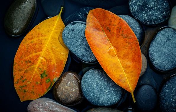 Картинка осень, листья, камни, желтые, yellow, stone, autumn, leaves, осенние