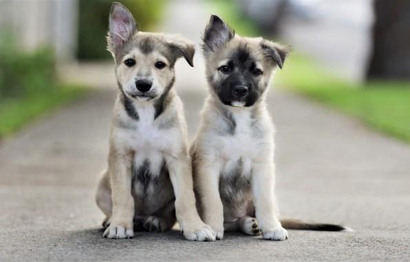 Картинка дорога, собаки, взгляд, щенки, road, мордочки, сидят, dogs, look, faces, sitting, puppies