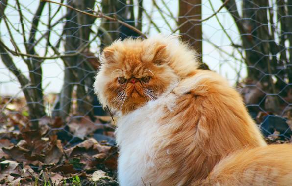 Картинка осень, кошка, кот, взгляд, морда, листья, деревья, ветки, природа, поза, сетка, ветер, листва, забор, спина, …