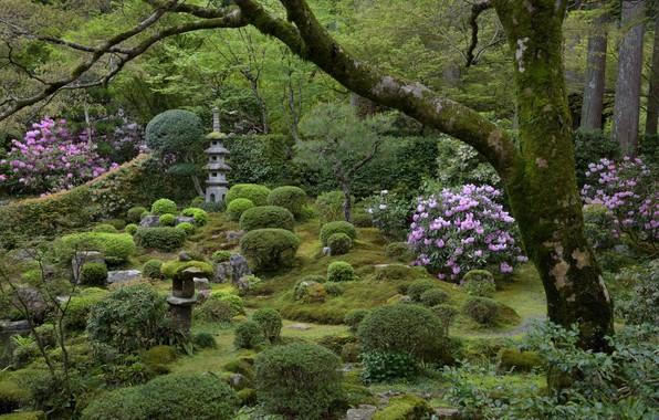 Картинка Цветы, Природа, Дерево, Япония, Сад, Камни, Кусты, Мох