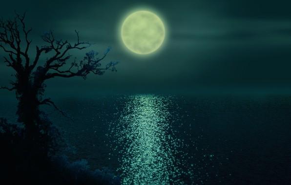 Обои ночь, река, Луна, рябь на воде, одинокое дерево