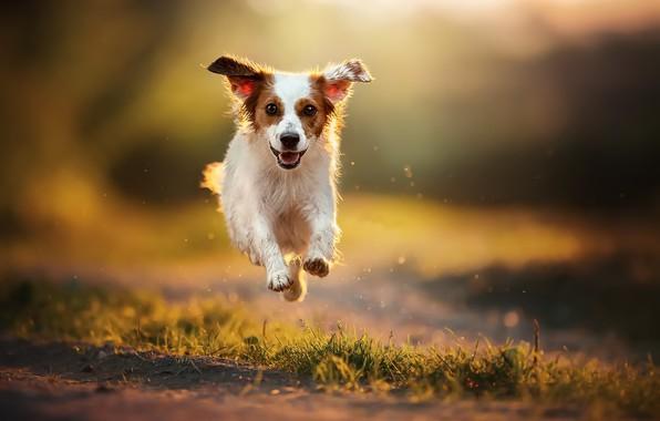 Картинка природа, друг, собака, бег