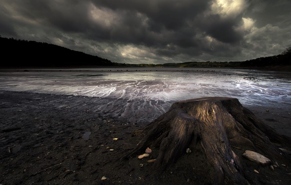 Картинка ночь, берег, пень