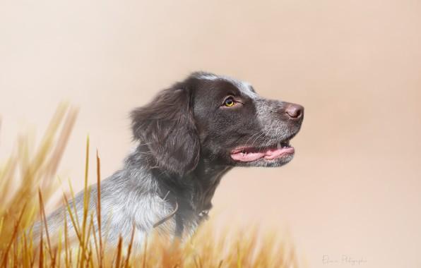 Картинка взгляд, фон, друг, собака, щенок