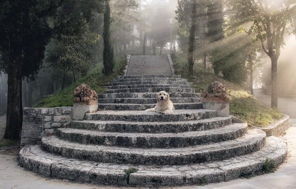 Картинка лучи, собака, ступени, статуи, dog, rays, ретривер, steps, retriever, statues, Uschi Hermann