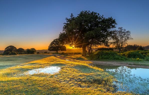 Картинка лес, небо, трава, вода, солнце, лучи, деревья, парк, Англия, кусты, New Forest Water Park