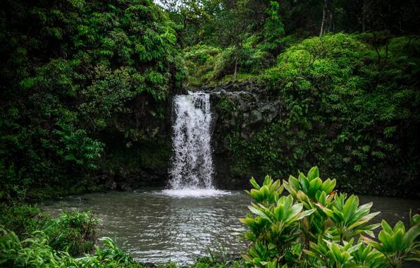 Картинка зелень, лето, деревья, природа, тропики, растительность, водопад