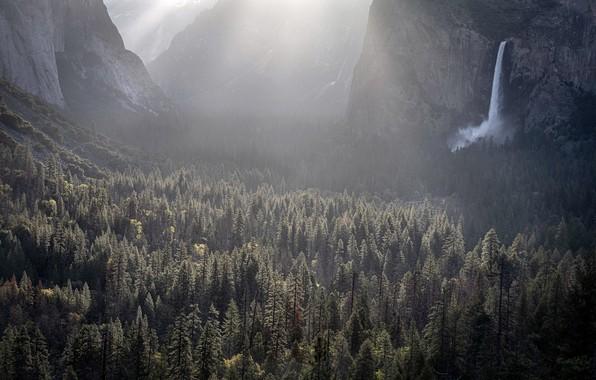 Картинка United States, California, Yosemite Valley, Foresta