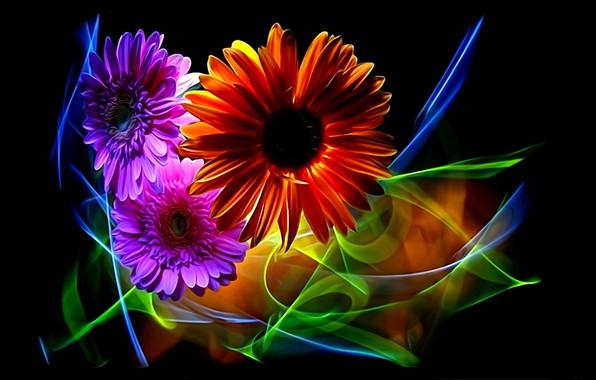 Картинка цветы, абстракция, рендеринг, лепестки, черный фон, герберы, картинка, неоновый свет, цветочная фантазия, линии света