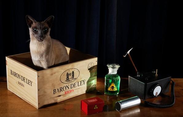 Картинка кот, стол, радиация, черный фон, натюрморт, ящик, физика, прибор, эксперимент, дозиметр, измерительный, кот Шредингера