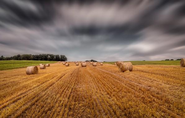 Картинка поле, горизонт, тюки, солома