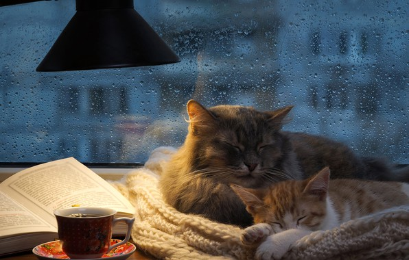 Картинка осень, кошка, кот, стекло, капли, кошки, уют, дом, котенок, тепло, серый, комната, дождь, отдых, чай, ...
