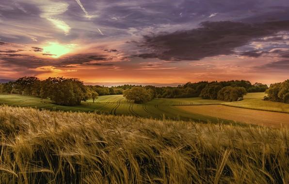 Картинка поле, осень, лес, лето, небо, солнце, облака, деревья, пейзаж, закат, тучи, природа, поля, рожь, вечер, …