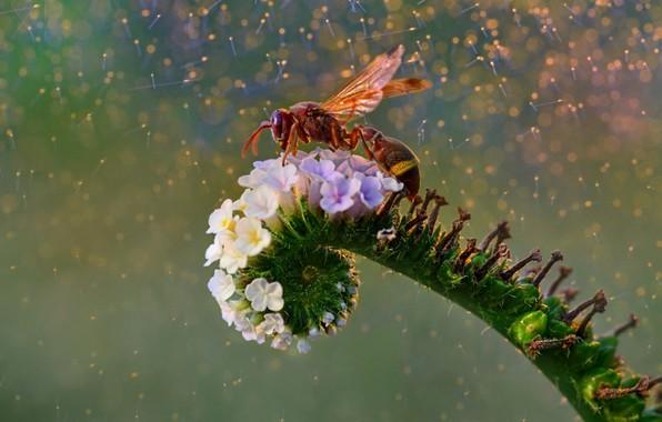 Картинка цветок, оса, flower, wasp, Fahmi Bhs