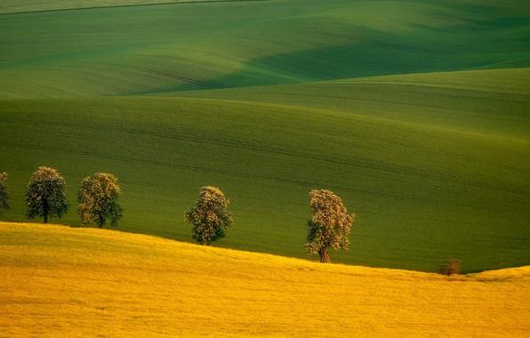 Картинка деревья, поля, Чехия, Czech Republic, Южная Моравия, South Moravia