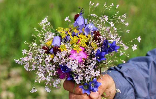 Картинка лето, цветы, Букет