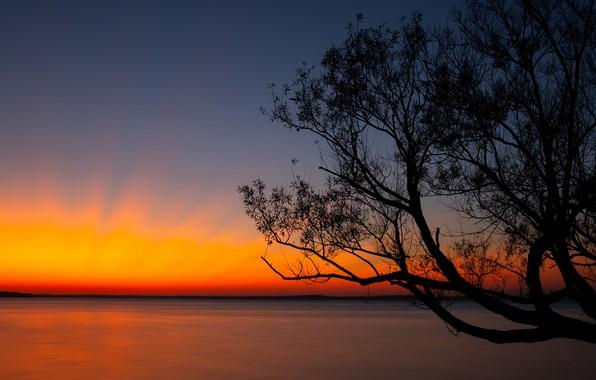 Картинка dark, twilight, sky, nature, sunset, water, lake, landscapes, tree, dusk, horizon, shoreline, 4k ultra hd …