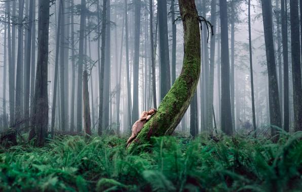 Картинка лес, девушка, природа