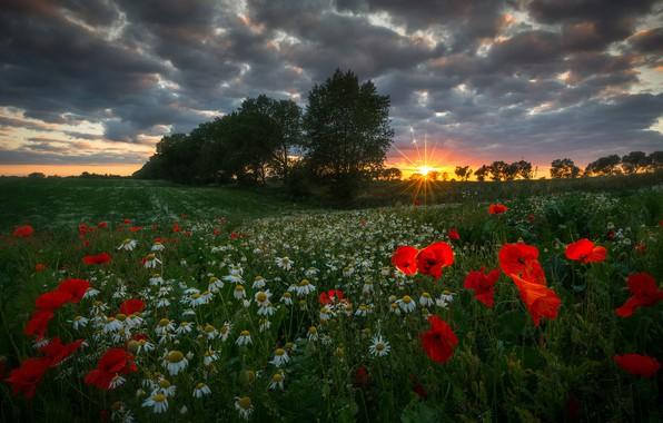 Картинка лето, трава, солнце, лучи, деревья, пейзаж, закат, цветы, природа, маки, ромашки, луг