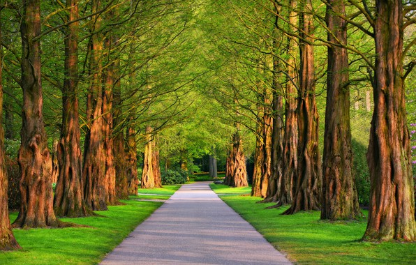 Картинка лето, солнце, деревья, дорожка, аллея