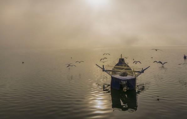 Картинка небо, вода, свет, птицы, сети, туман, озеро, блики, отражение, река, рассвет, лодка, рыбалка, чайки, стая, …