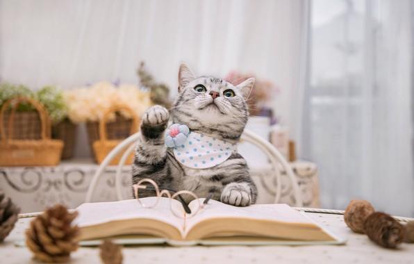 Картинка кот, стол, книга