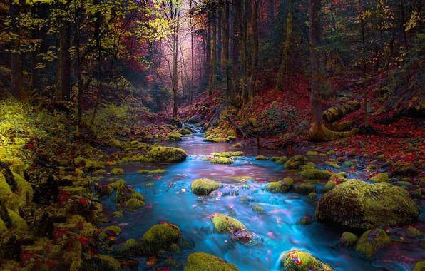 Картинка осень, лес, деревья, пейзаж, горы, природа, река, ручей, камни, мох, Босния, Mevludin Sejmenovic