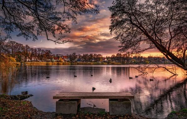 Картинка осень, облака, деревья, пейзаж, закат, птицы, природа, пруд, утки, дома, месяц, лавка, берега