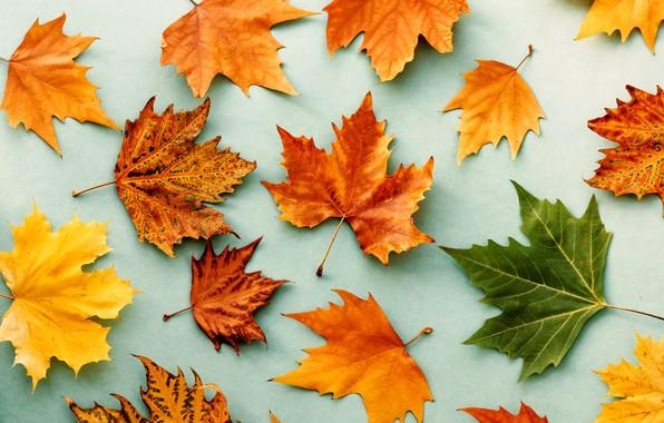 Картинка осень, листья, фон, colorful, rainbow, клен, wood, autumn, leaves, maple