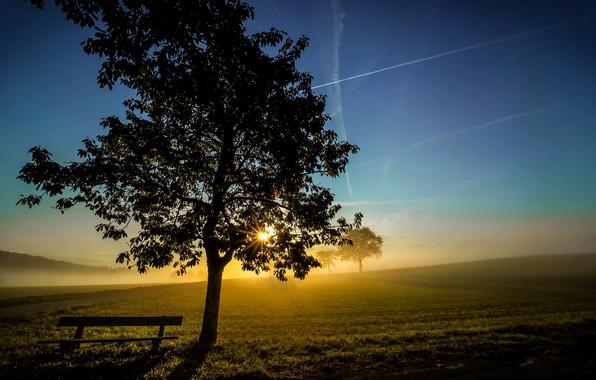 Картинка свет, туман, дерево, утро, скамья