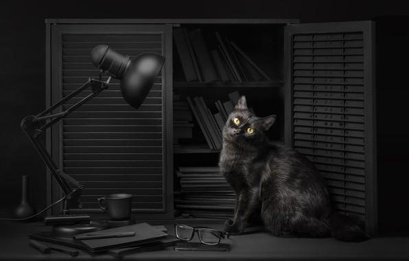 Картинка кошка, глаза, кот, взгляд, свет, фон, черный, лампа, очки, light, библиотека, black, eyes, cat, background, …
