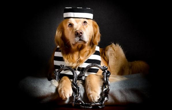 Фото обои друг, узник, собака