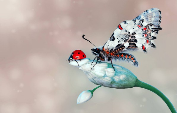 Картинка цветок, макро, насекомые, фон, бабочка, божья коровка, жук, бутоны