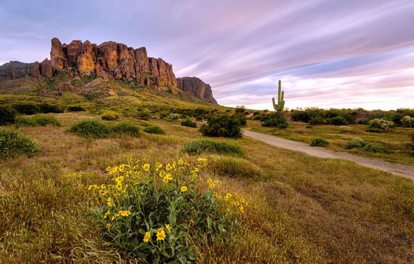 Картинка landscape, Flowers bloom, Arizona desert, Superstition Wilderness