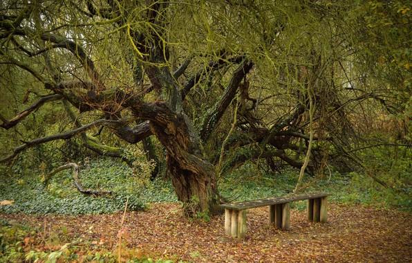 Картинка скамейка, дерево, листва