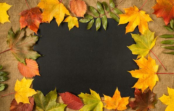 Картинка осень, листья, фон, colorful, клен, yellow, autumn, leaves, frame, maple