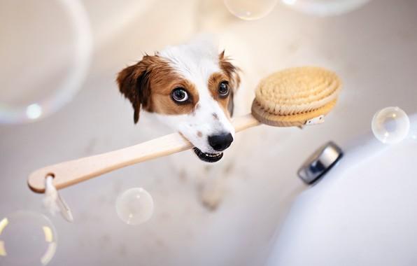 Картинка друг, собака, ванна