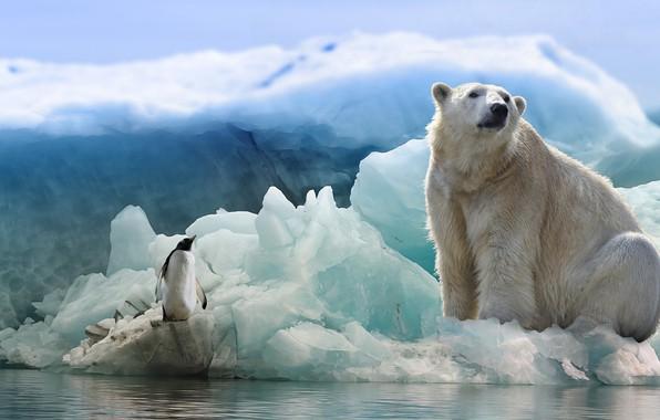 Картинка лед, зима, животные, белый, взгляд, вода, снег, природа, поза, коллаж, птица, лёд, обработка, ледник, медведь, …