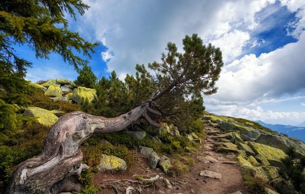 Картинка Природа, Дерево, Горы, Тропа, Камни, Сосна