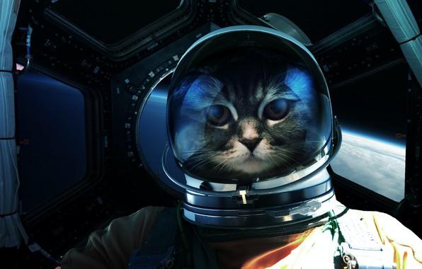 Картинка Взгляд, Кошка, Космос, Кот, Астронавт, Глаза, Морда, Космонавт, Арт, Art, Фантастика, Cat, Eyes, Glance, Cosmos, …