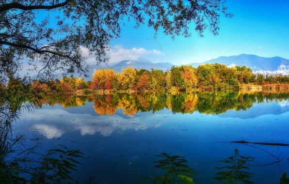 Картинка осень, деревья, ветки, озеро, отражение
