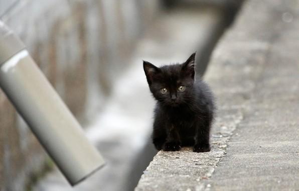 Картинка чёрный, малыш, котёнок
